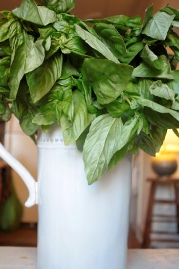 Basil in a vase